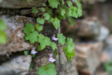 Piedras florecidas